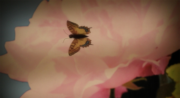 butterfly-rose-emily-dickinson-letter-to-the-world-image