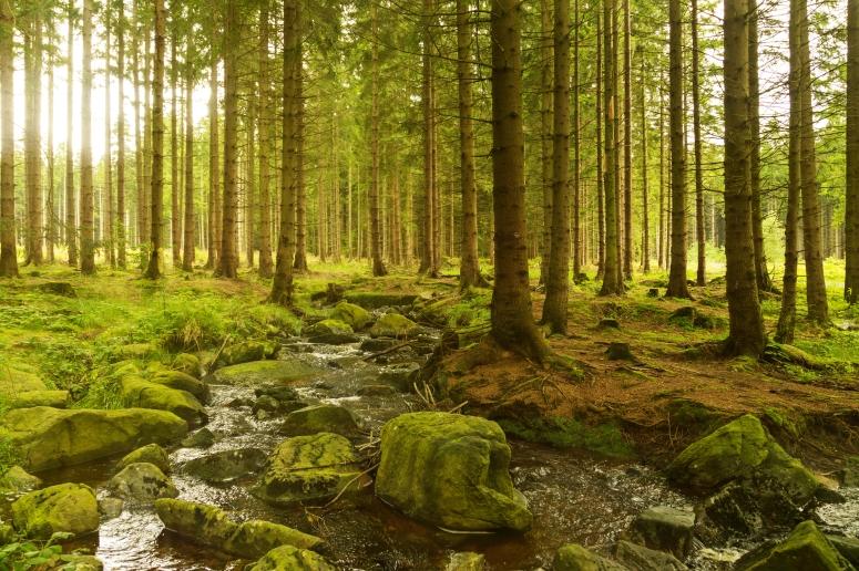 Forest Landscape Emily Dickinson.jpg